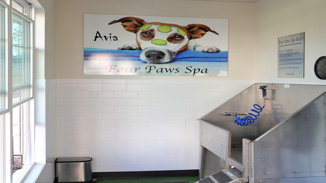 Wash station in pet spa area
